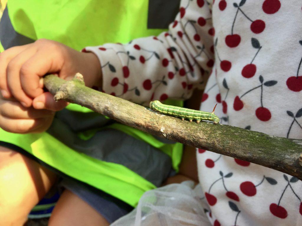 Descubriendo la naturaleza en Escola Natura